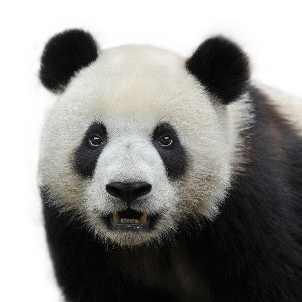 Google Releases New Panda Update Against Thin Content